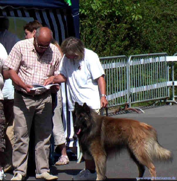 wesensprüfung für hunde
